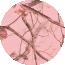 Realtree® Pink
